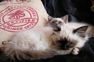Foto di due gatti